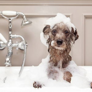 Photo of a wet dog in a bathtub covered in bath bubbles