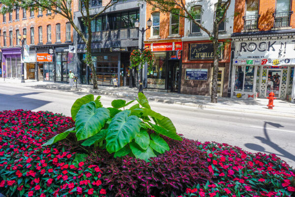 Image of Gardens on King St. East with Stores in Background